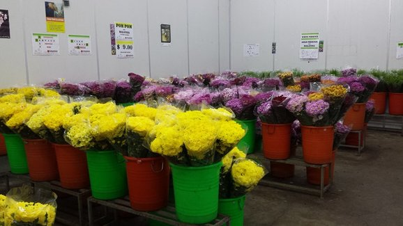 Familiar flowers that we often see in the markets – assortment of chrysanthemums and the like – that are normally used for Chinese religious praying or ...